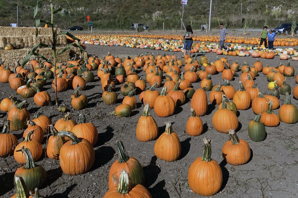 Half Moon Bay pumpkin patches