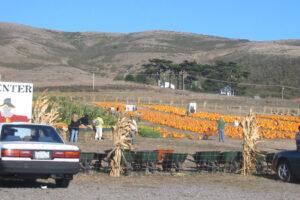 Bob's Pumpkin Farm
