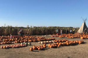 Farmer John's Pumpkins