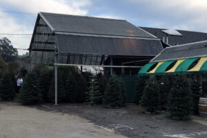 Repetto's Florist and Nursery - Christmas Tree Lot