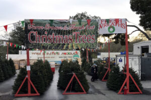 Tom and Pete's -Pre-cut trees