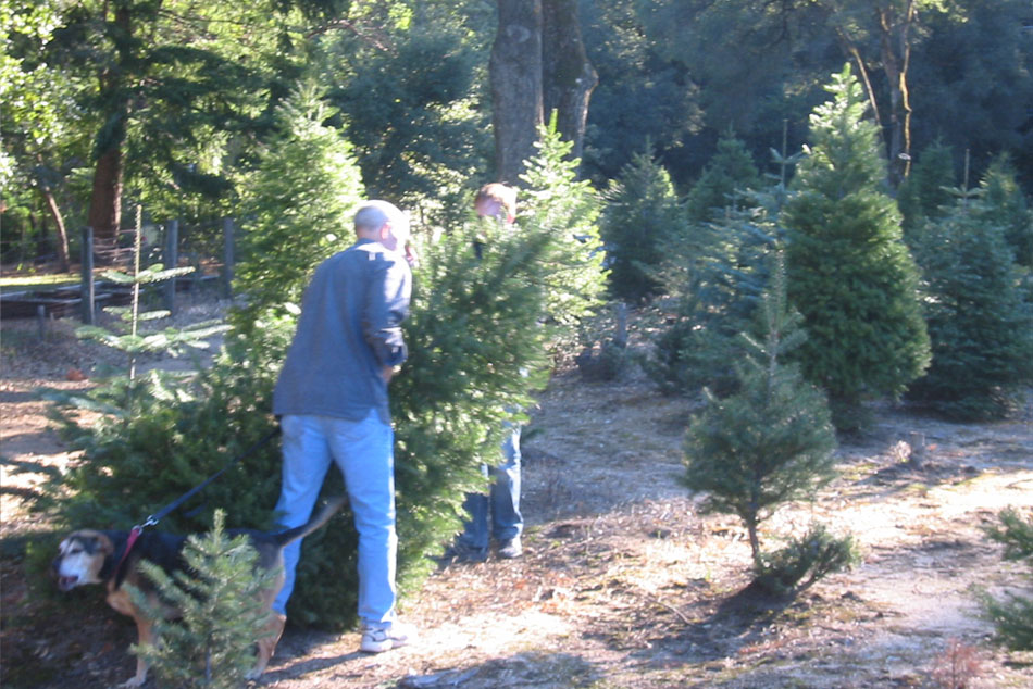 Monterey Christmas Tree Farms and Lots