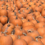 Monterey Pumpkin Patches & Map