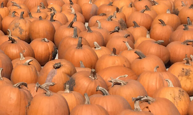 Monterey Pumpkin Patches & Map