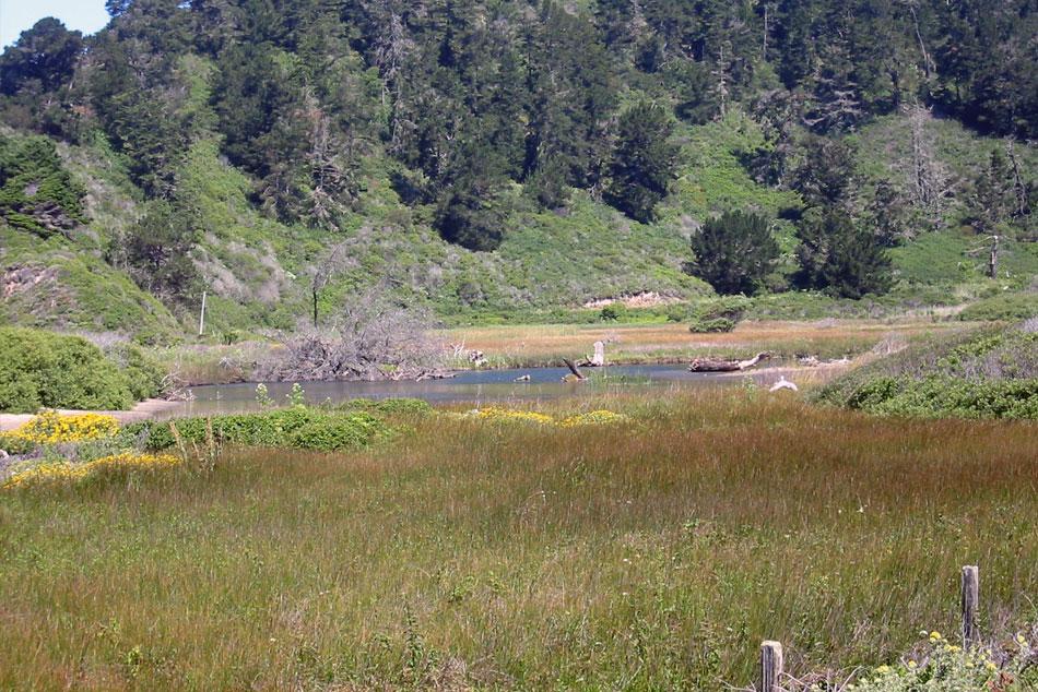 Big Basin Redwoods State Park ─ Rancho Del Oso