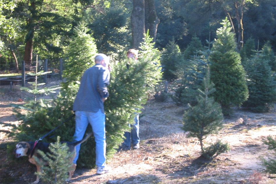 Santa Cruz Christmas Celebrations