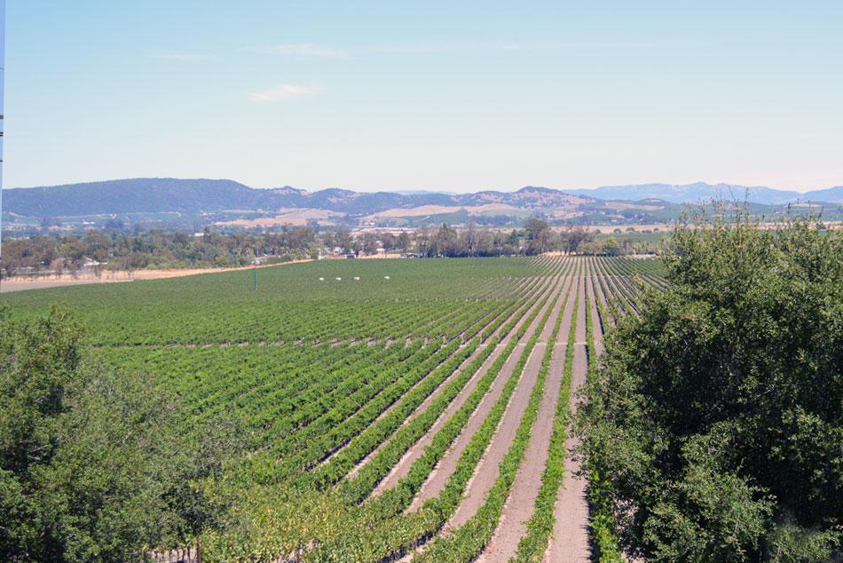 Sonoma Valley Wine Tasting
